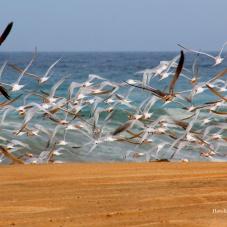 Visita estos 3 hermosos destinos de playa para evitar las aglomeraciones