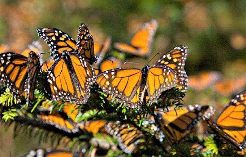 Villa Montaña te lleva al Santuario de la Mariposa Monarca