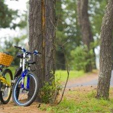 ¡A rodar se hadicho! Lugares perfectos para andar en bicicleta