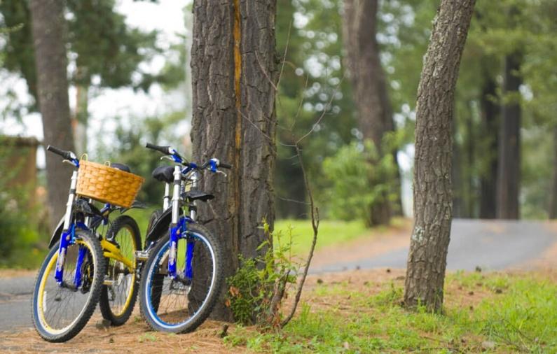 bicicletas cerca del camino