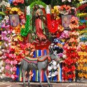 hoteles-boutique-de-mexico-destino-ciudad-de-mexico-12