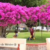 hoteles-boutique-de-mexico-destino-sayula-jalisco-16