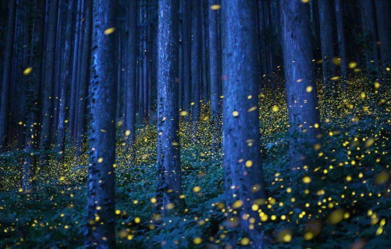 Puebla brilla con su santuario de luciérnagas